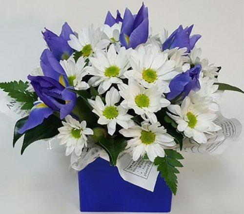 Get well — Same-day flower delivery in Darwin, NT